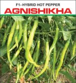 old agneeshikha